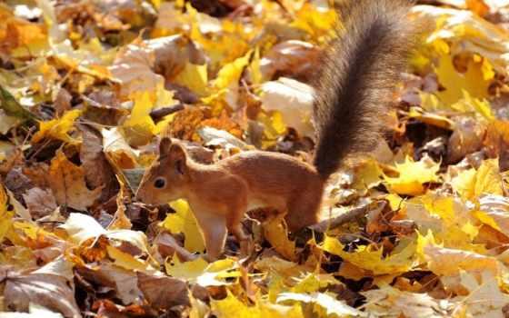 белки, осень, листва
