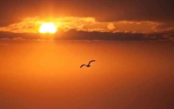 птица, полет, небо, oblaka, sun, закат, крылья, чайка,