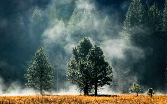 лес, тумане, лесу, trees, сосны, фотообои, фотопанно, утро, nat,