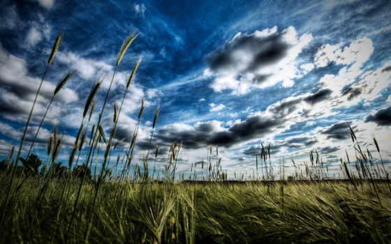 природа, небо, поле, день, sun, широкоформатные, облаками, природы, рисунки, колоски,