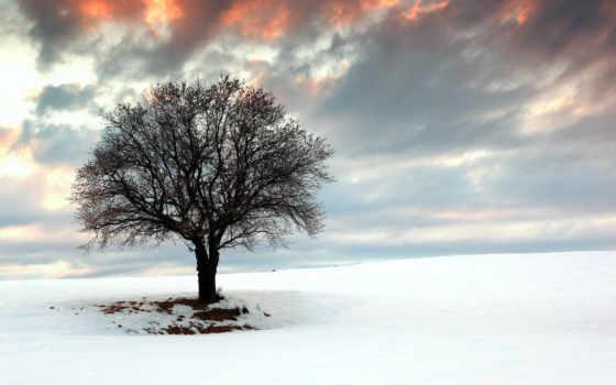 winter, снег, поле, дерево, пейзажи -, themebeta, desktop, chrome, themes,