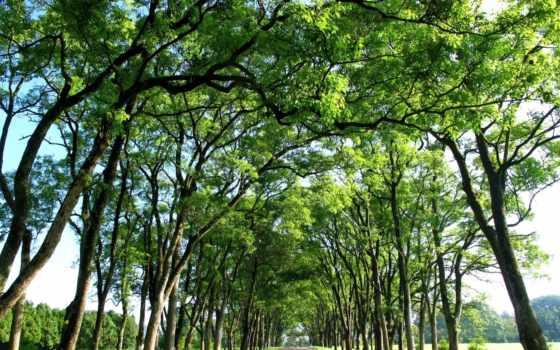 top, дорога, ветви, trees, desktop, дерево, mac,