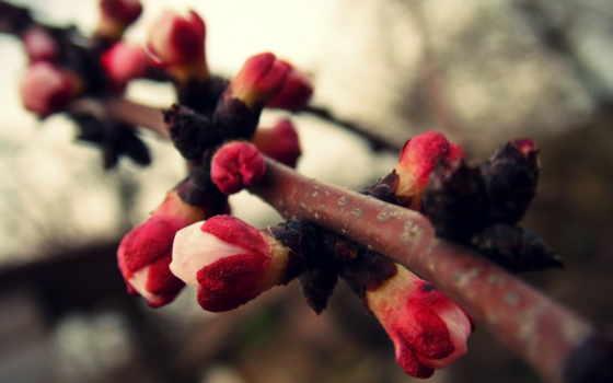 весна, branch, trees, cvety, тепло, абрикос, розовые, растение, размытость, цветущие,