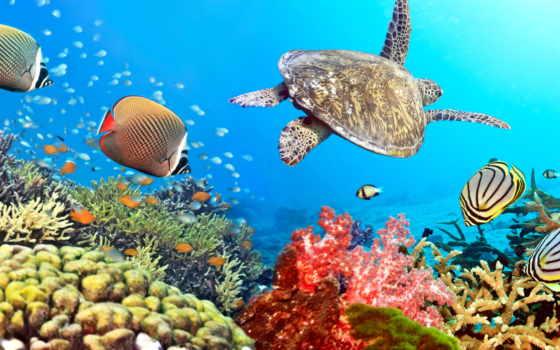 fish, world, underwater, пульт, skinat