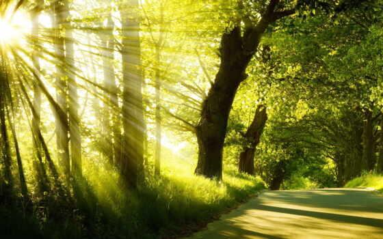 утро, rising, ray, park, summer, туман, trees