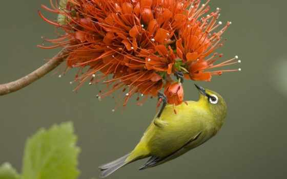 animals, birds Фон № 26528 разрешение 1920x1200