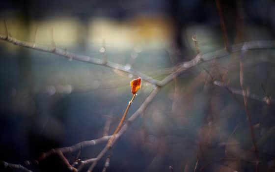 макро, осень, природа