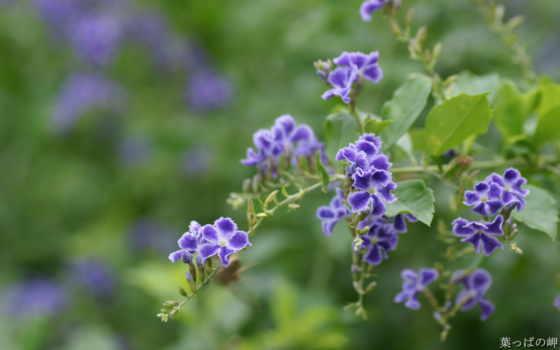 цветы, flowers, природа, free, mobile, market,
