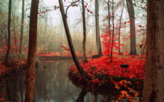 природа, пасть, ultra, trees, covers, high, beautifull,