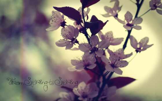 весна, cvety, дерево