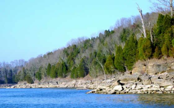 красивый, природа, оформление, лес, formatı, trees