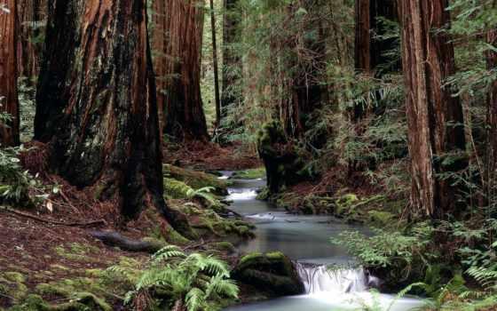 лес, коллекция, смотреть, user