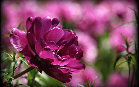 venerdi, buon, venerdì, tl, world, красивый, цветов, giornata, sereno, цветы,