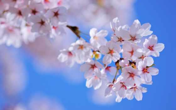 flowers, природа, весна, цветы, love, desktop, романтика,