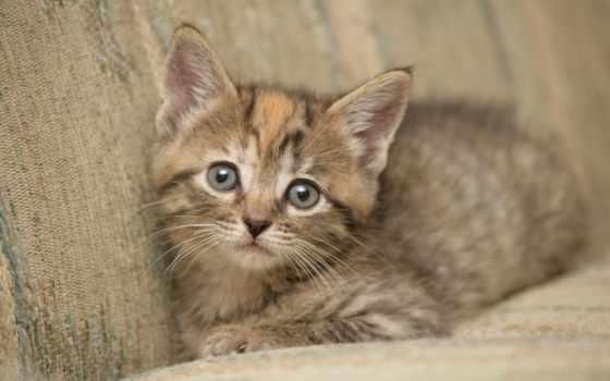 тюлень, small, котенок, глазами, zhivotnye, nice,