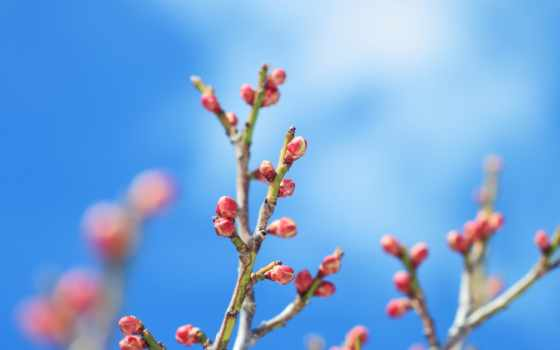 one, breath, деревьев, весны, бутоны, цветочные, цветущие, весной, почки, распускающиеся,