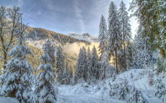 природа, коллекция, winter, лес, года, лесу, яndex, зимние,