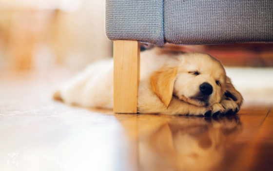 щенок под кроватью