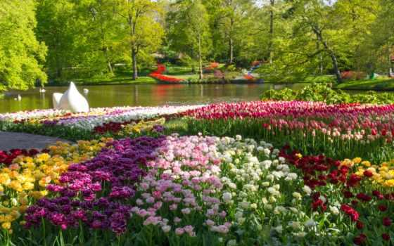 природа, тюльпаны, весна, cvety, park, iphone, пруд, design,