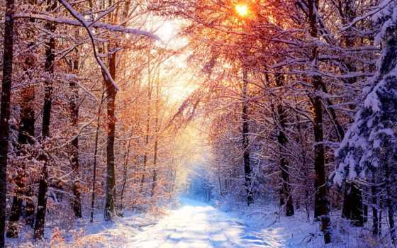 лес, winter, тропинка, красивый, коллекция