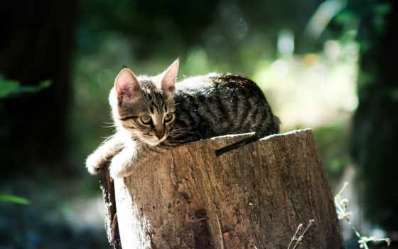 котик на пеньке