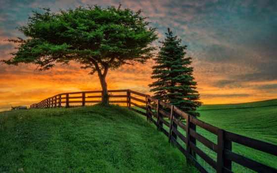 pole, пейзаж, leto, zakat, забор, дерево,