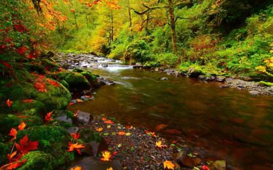 река, листья,
