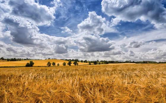 поле, природа, урожай