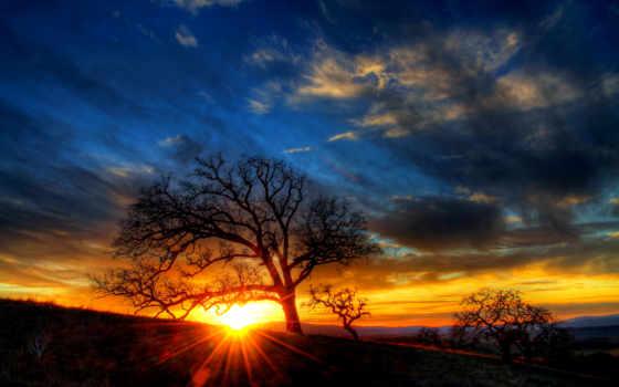 саванна, дерево, smartphone, sunbeam, abyss, our,