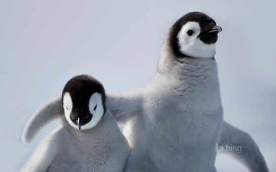 frases, amor, baby, con, san, cute, valentín, pingüinos, penguins, tiernos, amistad,