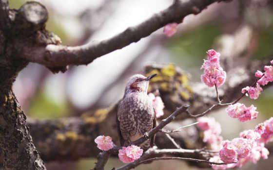 весна, птицы, деревьях, дереве, цветущем, цветущих, коллекция, лучшая, подборка, птичек,