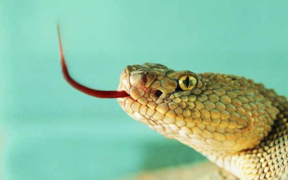 змеи, животные, змея