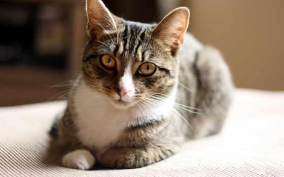 кот, кошки, подборка