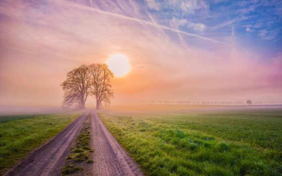 природа, деревя, дорога