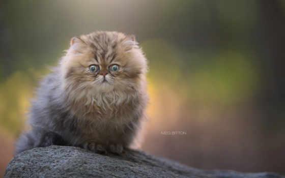 кот, сидит, images, зелёный, eyes, www, камне, су, goodfon,