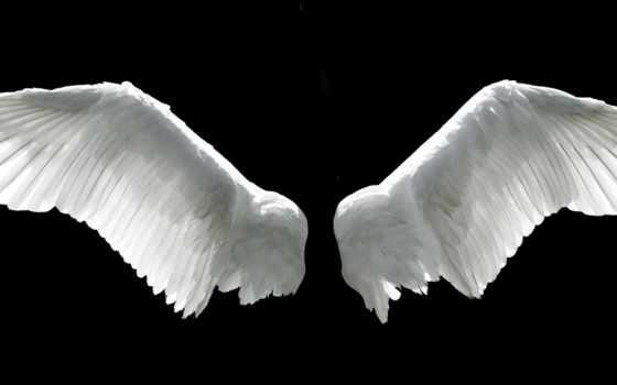 ангела, крылья, крыла,
