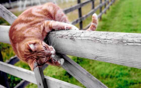 кот, забор, animal, настроение, red, striped