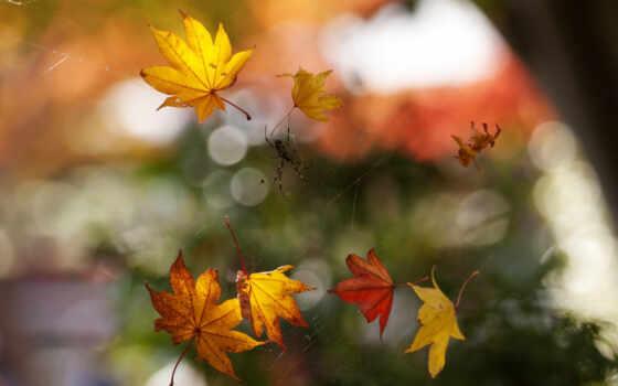 макро, осень
