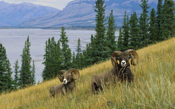 animals, животные Фон № 26028 разрешение 1920x1080