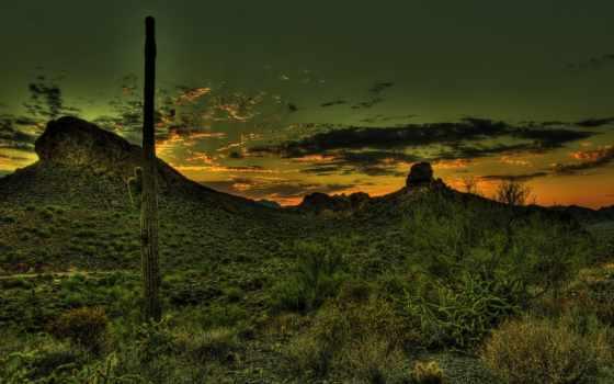 mexico, кактус, пустыня