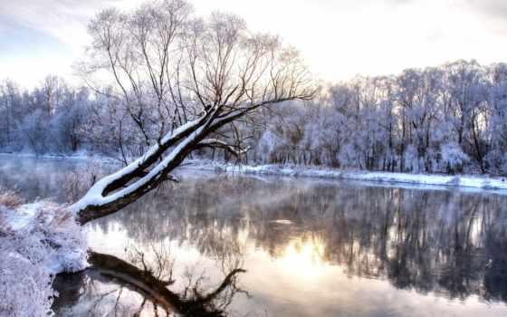 winter, лес, снег Фон № 61036 разрешение 1920x1200