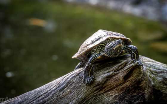 черепаха, панцирь, photos