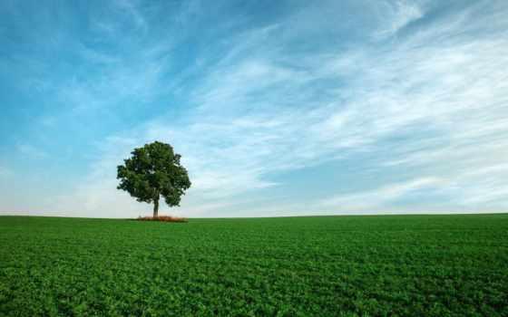 небо, photos, дерево, trees, фон, классы, тодд, photography, gooollll, поле,