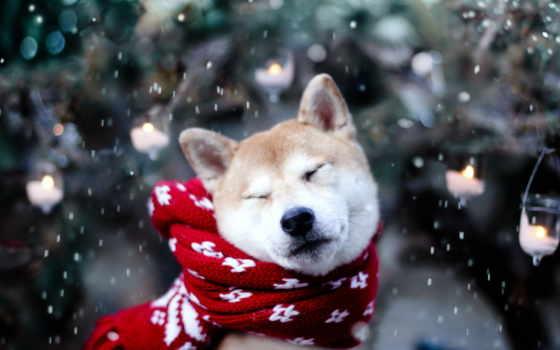 прищур, хаски, шарф, именем, новогодние, красивые,
