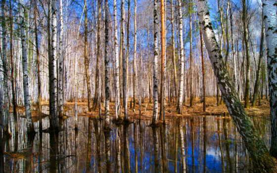 дерево, береза, abyss, high, природа,