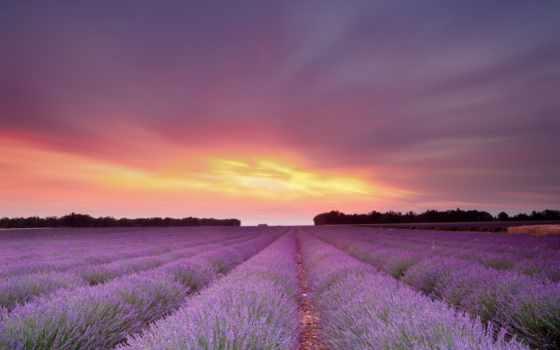 lavender, поле, cvety, небо, широкоформатные, природа, закат,