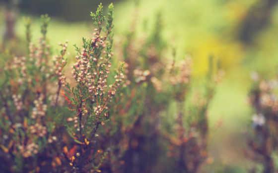 трава, макро, cvety, свет, дек, размытость,