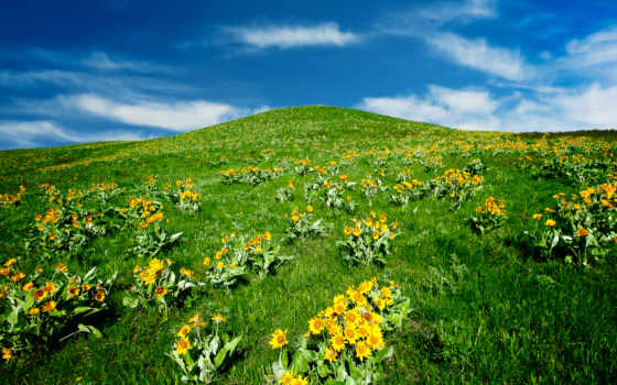 landscape, трава, flowers, hill, небо, colline, flores, tapety,