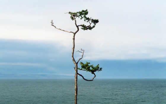 дерево, solitary, photography, desktop, github, myspace, макет,