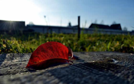 miscellaneous, листва, листья, бесплатные,